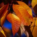 Autumnal in Oregon