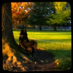 Atticus in the park