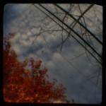 Autumn turns to winter