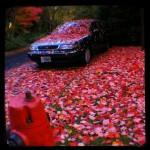 TtV, autumnal, chameleon car