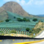 Tilt-shift Agave Field