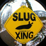 Slug Crossing