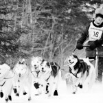 Greenville Dog Sled Race – 30 miles