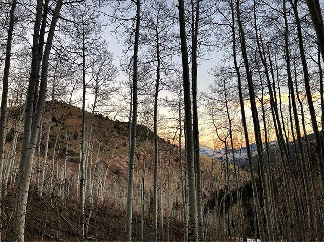 Butlers Fork - Big Cottonwood